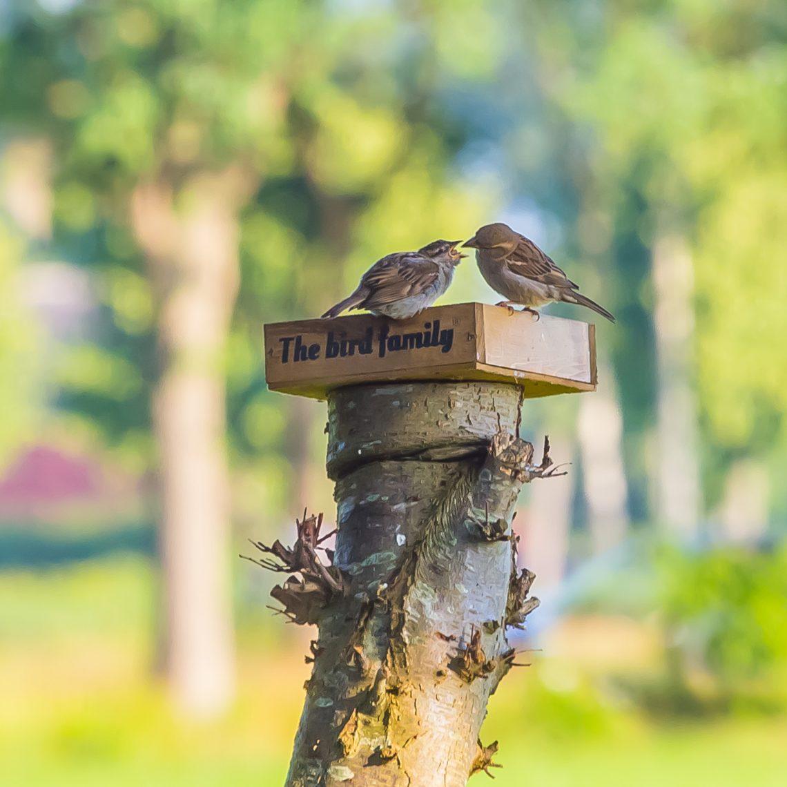 the bird family