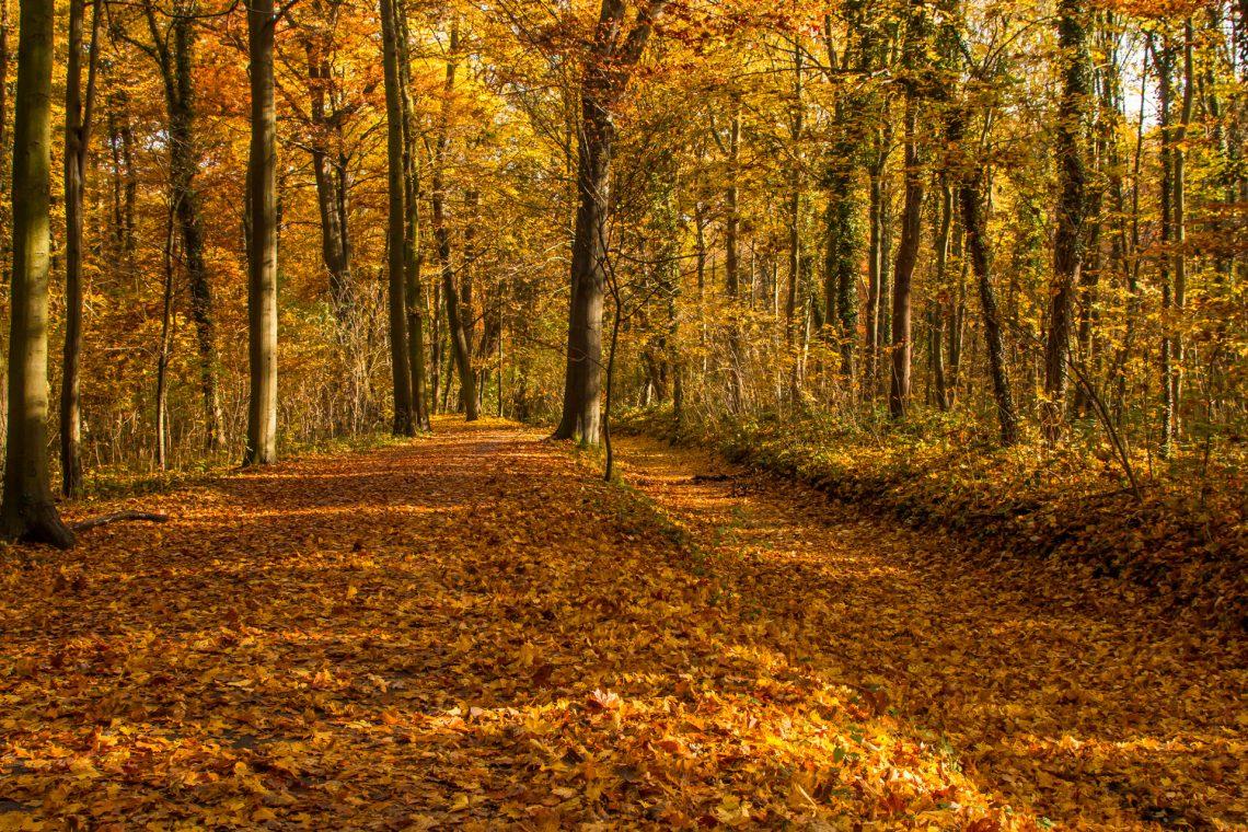 Herbst in der Eilenriede