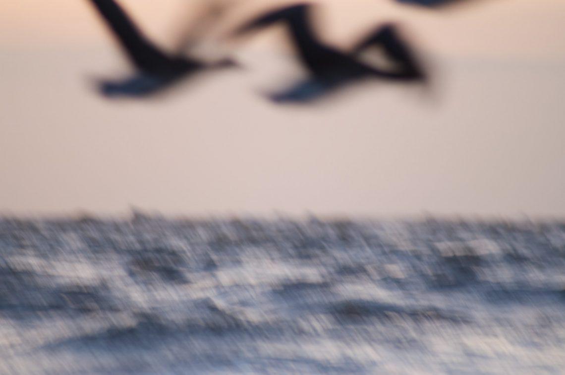 Das Meer im Frühling -  ruhiger Wellengang -  den ganzen Tag...  ⛩  Haru no umi - hinemosu notari - notari kana  (Buson)