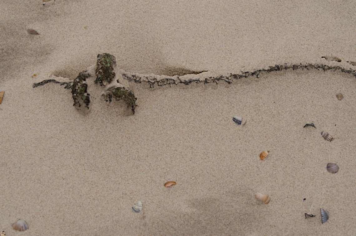 Sommernacht - am Strand liegt noch - eine vergessene Fackel  ⛩  Mijikayo ya - namiuchigiha no - sute kagari  (Buson)