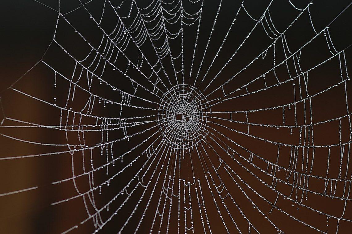 Als Spinne geboren -  ist sie dazu verdammt -  nur Netze zu spinnen  ⛩  Kumo ni are - ami o kakeneba - naranu kana  (Takahama Kyoshi)