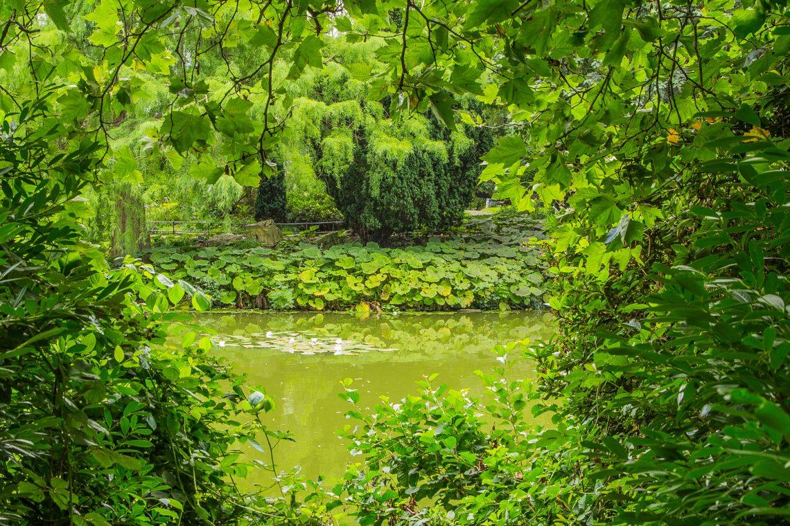Buschrohrsänger - bist du die Seele im Schlaf - der schönen Weide ⛩ Uguisu o - tama ni nemuru ka - tao yanagi (Bashō)