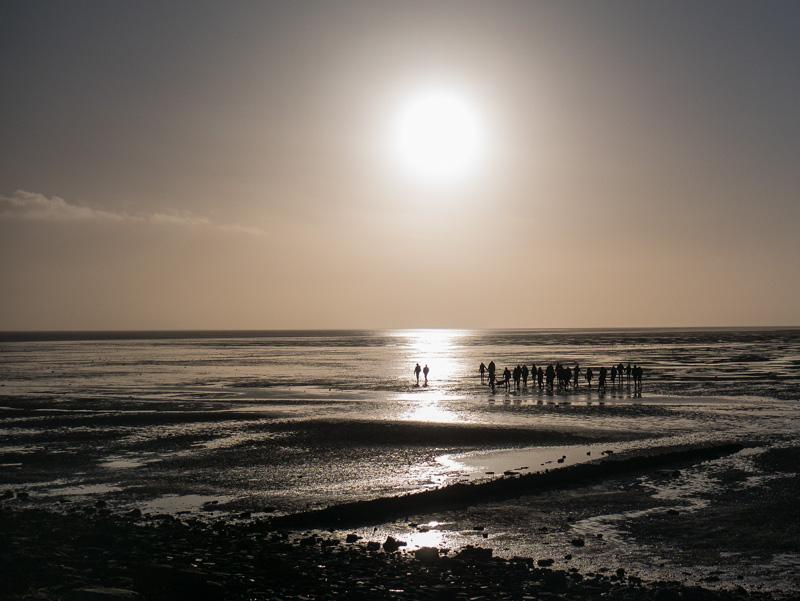 Im Strahl der Sonne - früh morgens im Wattenmeer - auf dem Meeresgrund ⛩