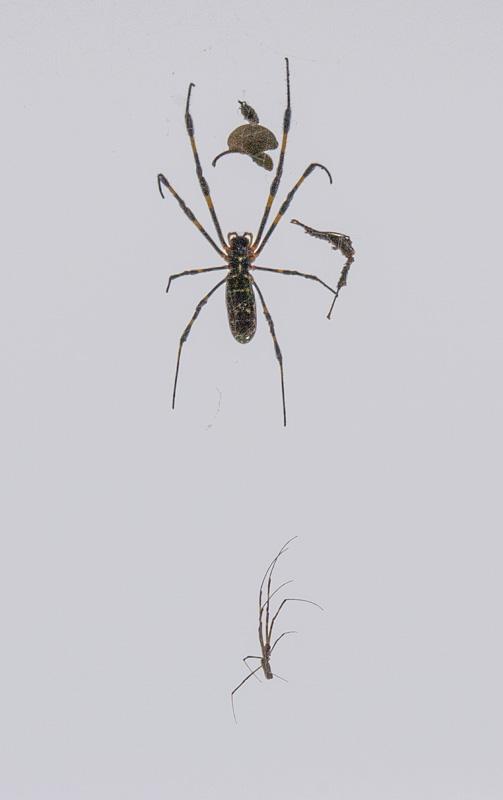 In die weite Welt - ziehn die Spinnenkinder weg - Jedes macht sein Glück (Issa)