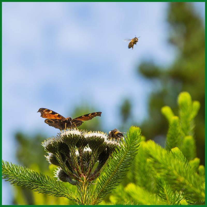 Welchen Frühlingstraum ⛩ träumt er wohl, der Schmetterling, ⛩ der die Flügel regt? ⛩ (Garaku)