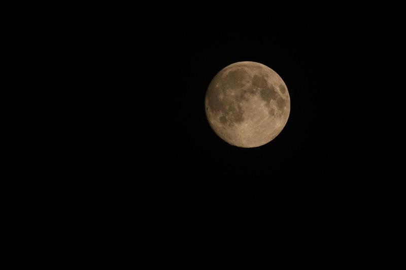 Blüten, noch so schön, ⛩ heute ist der volle Mond ⛩ schöner noch als ihr! ⛩ (Sôin)